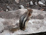 A chipmunk at Johnston Canyon