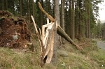 Storm Damage near Harrop Tarn