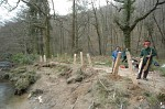 Fencing in Hembury Wood, Devon