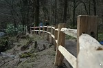 Nearly completed fence in Hembury Wood, Devon