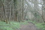 Woodland at Parke, Devon