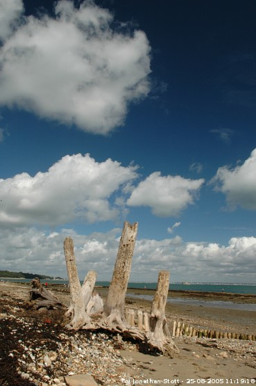 Beach stumps at Bembridge on the Isle of Wight