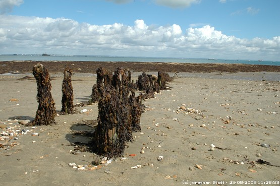 Beach stumps covered in seaweed