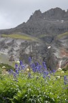 Wild flowers in Yankee Boy Basin, Colorado