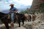 Mule train on the South Kaibab Trail, Grand Canyon National Park, Arizona